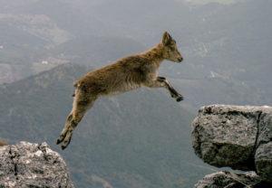 山羊(ヤギ)が登場する夢の夢占い