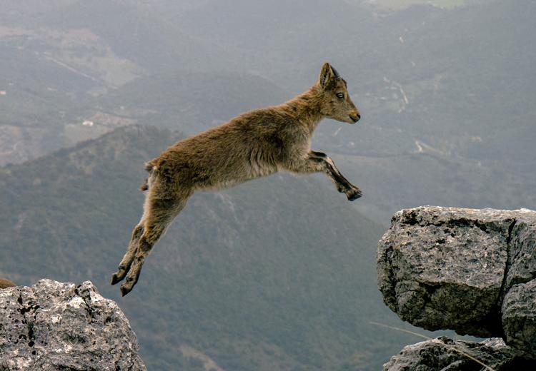 山羊(ヤギ)が現れる夢の夢占い