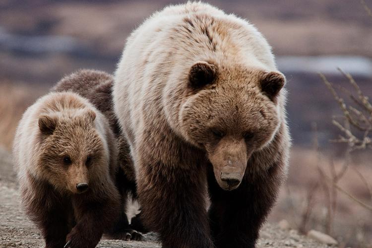 熊(くま)が登場する夢の夢占い