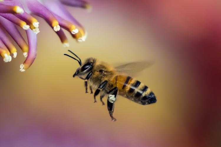 蜂(はち)の夢の夢占い