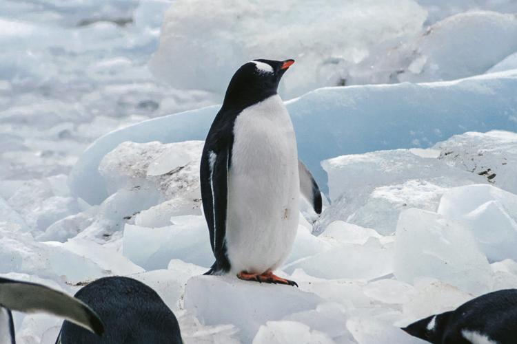 ペンギンの夢の夢占い