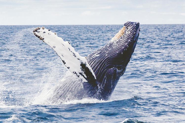 クジラの夢の夢占い