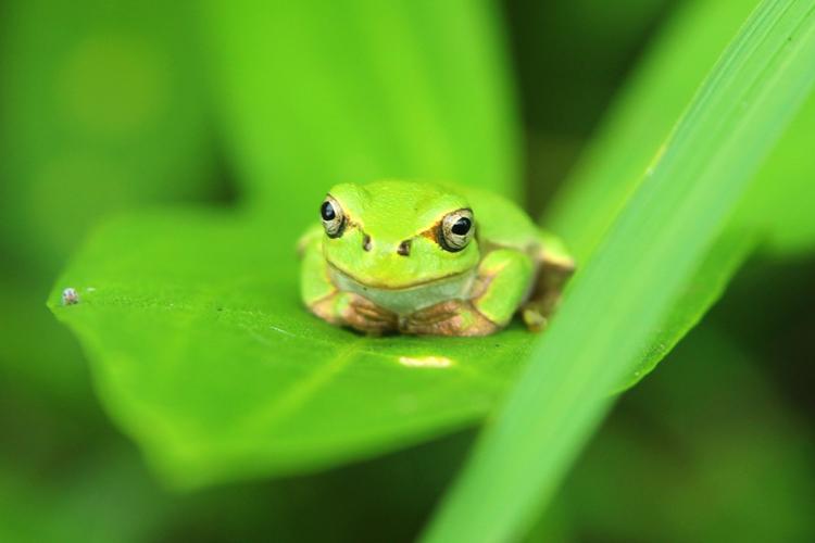蛙(かえる)の夢の夢占い