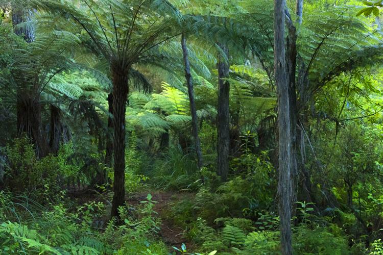 ジャングルの夢の夢占い